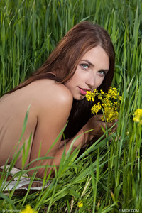 Niemira - Wild Flower