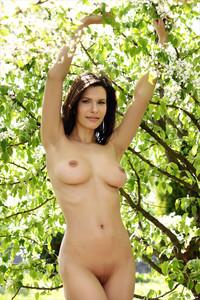 Suzanna A - Under the Cherry Tree